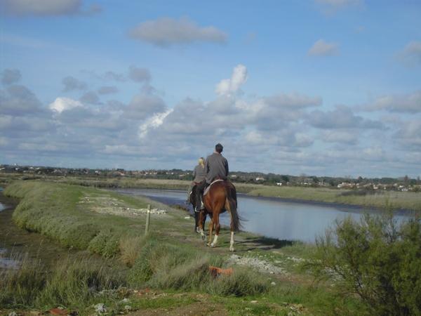 Balade à cheval dans les marais des Olonnes