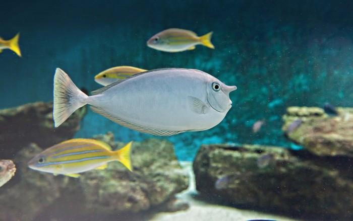 aquarium 7eme continent