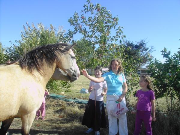 Des chevaux comme uniques voisins du camping