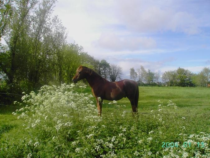 Cheval dans les prés, le Domaine des Rousselières c est près de 35 Ha