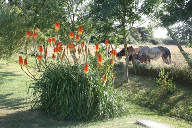Fleurs du domaine