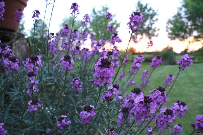 Beaucoup d espèces de fleurs