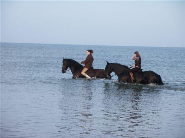 Exercice dans le milieu aquatique pour les chevaux