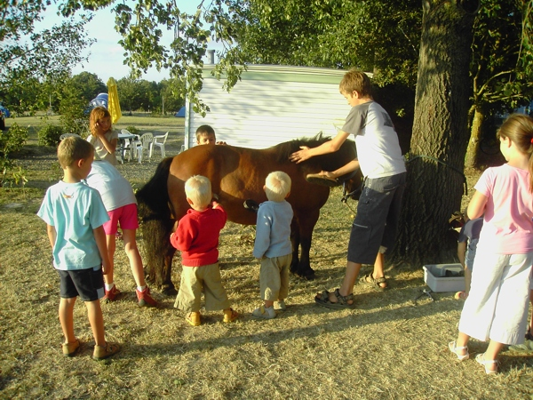 Les enfants apprennent à toiletter le poney